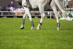 Equestrian Sports Stock Images