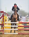 Equestrian sporty Obraz Royalty Free