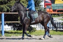 Equestrian sporty z nastolatkami Konia klub Dziewczyna jedzie konia Obraz Stock