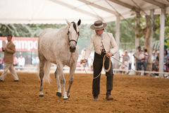 Equestrian test functionality with 3 pure Spanish horses Royalty Free Stock Photography