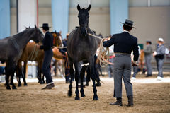 Equestrian test of morphology to pure Spanish horses Royalty Free Stock Photos