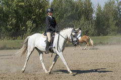 Equestrian - Training Stock Images