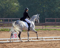 Equestrian woman and Hanoverian horse Stock Photography