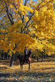 Equestrian women ride across a grove at dusk Royalty Free Stock Photography
