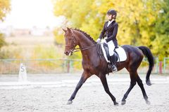 Equestrian wydarzenie sportowe przy spadkiem z kopii przestrzenią Zdjęcia Stock