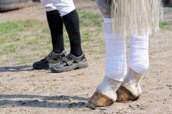 Equestrian y caballo Imagen de archivo libre de regalías