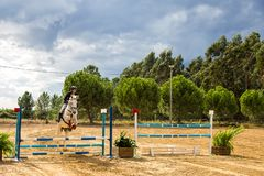 Equestrianism in einer portugiesischen Natur-Pferdereserve stockbild