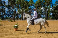 Equestrianism em uma reserva portuguesa do cavalo da natureza fotos de stock