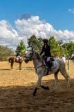 Equestrianism en una reserva portuguesa del caballo de la naturaleza imágenes de archivo libres de regalías