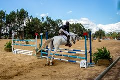 Equestrianism i en portugisisk naturhästreserv royaltyfri foto