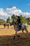 Equestrianism in a Portuguese Nature Horse Reserve royalty free stock images