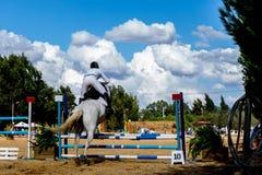 Equestrianism w Portugalskiej natura konia rezerwie zdjęcia royalty free