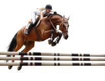 equestriat άλμα αλόγων Στοκ εικόνες με δικαίωμα ελεύθερης χρήσης