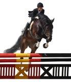 equestriat άλμα αλόγων Στοκ Εικόνες