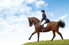 Equestriat, Dressage - Woman And Bay Horse Royalty Free Stock Photo