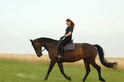 Equestrienne. Hanoverian. Equestrienne rides on hillside Royalty Free Stock Photography