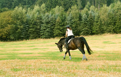 Equestrienne. Rides at a gallop across the field Stock Images
