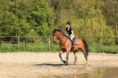 Equestrienne auf braunem Pferd am Sommer Stockbild