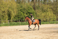 Equestrienne on brown horse. Beautiful equestrienne on brown horse in summer Royalty Free Stock Image