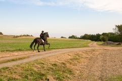 Equestrienne e um cavalo. Foto de Stock