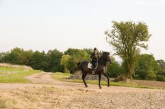 Equestrienne and a  horse. Royalty Free Stock Photo