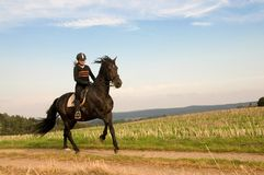 Equestrienne and a horse. Equestrienne  rides at a gallop across the field Royalty Free Stock Photo