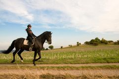 Equestrienne and a horse. Royalty Free Stock Photography