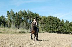 Equestrienne and  horse. Hanoverian. Horsewoman rides a horse across the field. Hanoverian Stock Photos