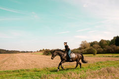 Equestrienne rides on the hillside. Hanoverian Royalty Free Stock Photography
