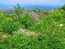 Equilíbrio entre a natureza e a urbanização - vista do pico da montanha às flores da mola de Khust e de verdes brilhantes no fore imagem de stock