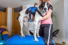 Equilibrio del cane Fotografie Stock