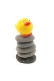 Equilibrium. Chicken in equilibrium stock image