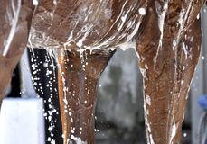 Equine время ванны искусства стоковое изображение