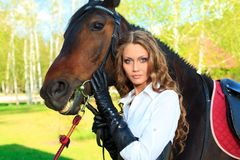 Equine Royalty Free Stock Photography