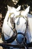 Equine Confessions Stock Image