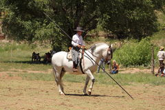 Equine Demonstration Las Golondrinas Summer Fest. Royalty Free Stock Images