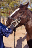 Equine dental work. Horse being examined and having his teeth cleaned and floated by veterinary dentist Stock Photo