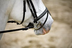 Equine detail Royalty Free Stock Image