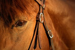 Equine detail Stock Image