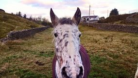 Equine enquiry?. Horse in field Stock Photography