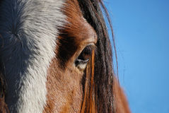 Equine Eye. Detail of horse's eye, forelock, and white blaze against a blue sky Stock Photo