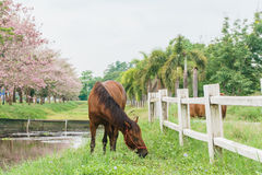Equine on farm with green grass, landscape view Stock Photography