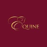 Equine Stock Photography
