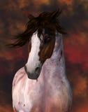 Equine häststående Royaltyfria Foton