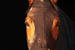 Equine hood Stock Photography