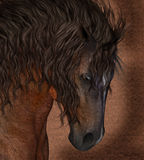 Equine Horse Greeting Card / Wall Art Royalty Free Stock Photo