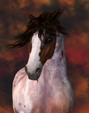 Equine Horse Portrait Royalty Free Stock Photos