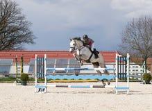 equine konkurrens arkivfoto