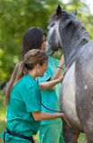 Equine veterinary Royalty Free Stock Photography