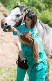 Equine veterinary. Veterinary great performing a scan to a young mare Royalty Free Stock Photo